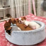 Now Cucciolina and I baupermiao puppy to be loved milanhellip